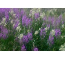 Flores e poesia / flowers and poetry by Brown Sugar. Views (61) favorited by (2) tvm! Photographic Print