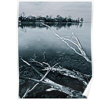 Crystal Waters, Faded Branches Poster