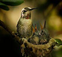 Mom hummingbird by Gary Lange