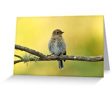 I thought it was a Thornbill at the time , not sure  now Greeting Card