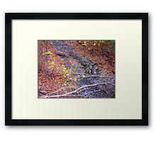 Leaf Windfall Framed Print
