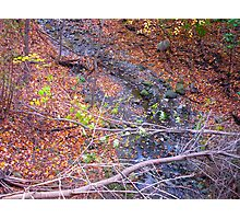 Leaf Windfall Photographic Print