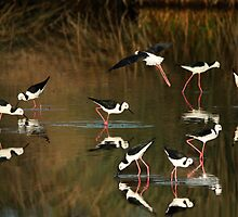 Evening Waders by byronbackyard