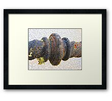 ... and in the decay lies beauty Framed Print