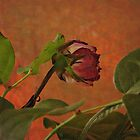 Red Rose and Warm Rust by Jane Underwood
