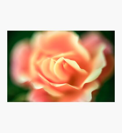selective focus close up of a rose flower Photographic Print