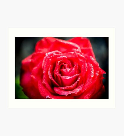 selective focus close up of a red rose flower Art Print