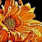 Orange Daisies by Robin Lee