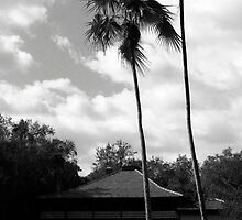 """The Barnacle"" Palms by AnalogSoulPhoto"