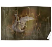 What's in your cattails  Poster