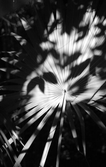Palm Shadows by AnalogSoulPhoto