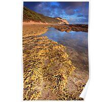 Seaweed at the Otways Poster
