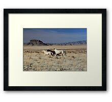 Wild Desert Mustangs Framed Print