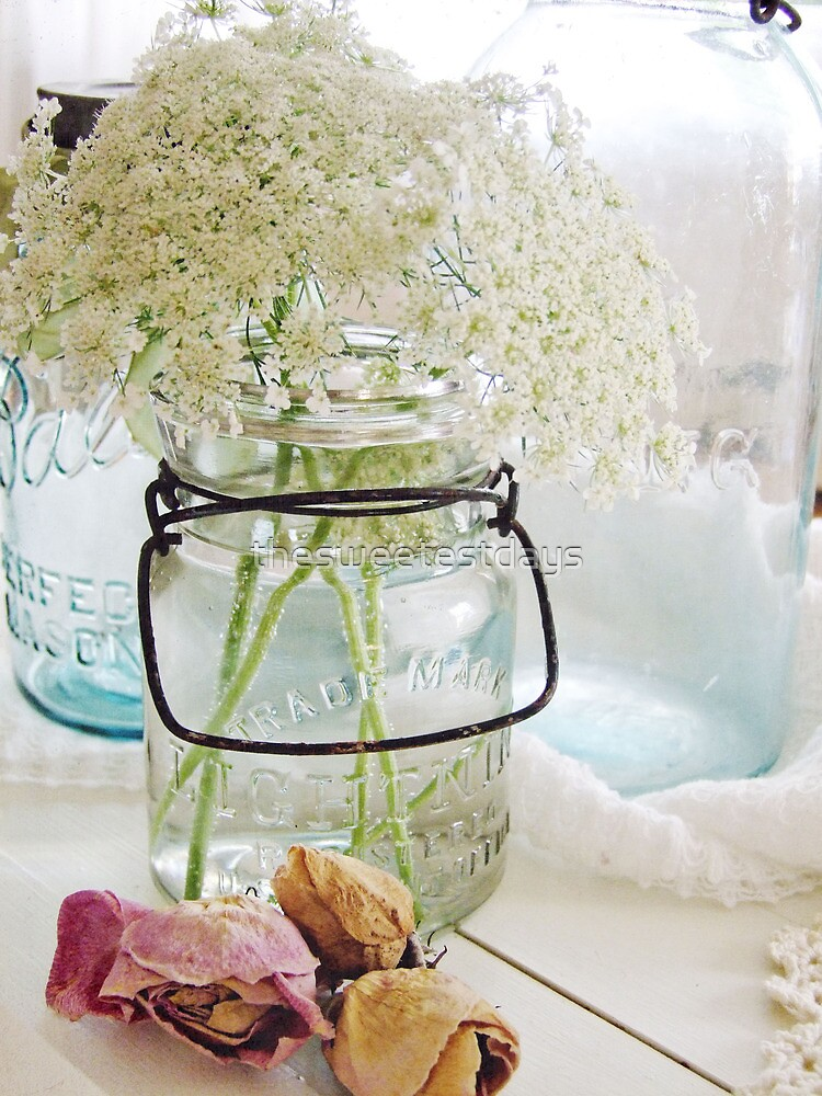 Shabby queen annes lace  by thesweetestdays