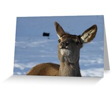 'Mommie?' Greeting Card