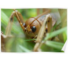 New Zealand Giant Weta Poster