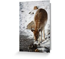 Young Curiosity Greeting Card