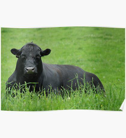 Garrett the Bull Poster