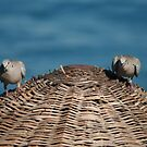 A Pair Of Doves On A Woven Sun Parasol by taiche