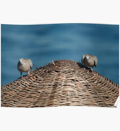 A Pair Of Doves On A Woven Sun Parasol Poster
