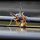 Wasp fight by Jasper Glaspie