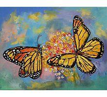 Monarch Butterflies Photographic Print