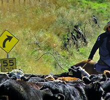 Local traffic jam, moving stock, Cavan Station, Wee Jasper via Yass NSW by Kate Howarth