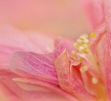 winter hibiscus by Teresa Pople