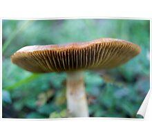 Mushroom Spacecraft Poster