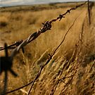 """""""What's mine is mine"""" - if only there were no fences! - South Africa by Sandy Beaton"""