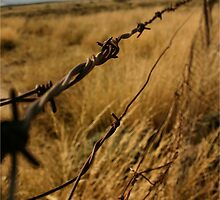 """What's mine is mine"" - if only there were no fences! - South Africa by Sandy Beaton"
