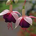 Dancing Fuchsia Duo by Bev Pascoe