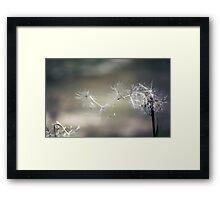 Wish upon a dandelion . . Framed Print