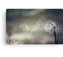 Wish upon a dandelion . . Canvas Print