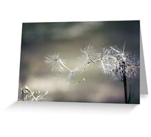 Wish upon a dandelion . . Greeting Card