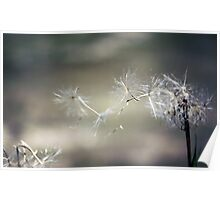 Wish upon a dandelion . . Poster