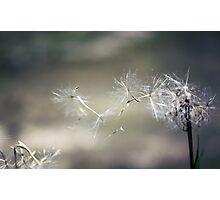 Wish upon a dandelion . . Photographic Print
