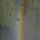 fulmar and rainbow series (image 2) by lukasdf