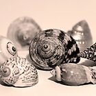 Small Collection of Shells by Jay Reed