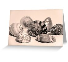 Small Collection of Shells Greeting Card