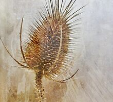 Textured Wild Teasel by Astrid Ewing Photography