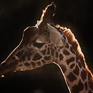 Every Giraffe has a Silver Lining! by MichelleRees