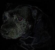 Staffordshire Bull Terrier, Portrait by dragoniab