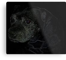 Staffordshire Bull Terrier, Portrait Metal Print