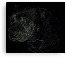 Staffordshire Bull Terrier, Portrait Canvas Print