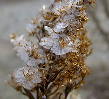 Frost Crystals On  Goldenrod by Tracy Faught