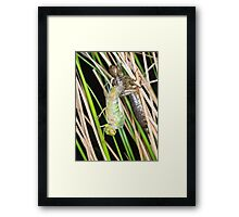 A new dragonfly emerges Framed Print