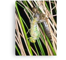 A new dragonfly emerges Canvas Print