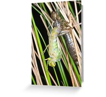 A new dragonfly emerges Greeting Card