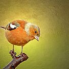 Chaffinch on Gold by Margaret S Sweeny